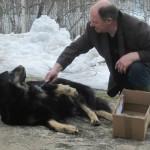 Koiran pohjavilla on parasta ja pehmeinä. Harjaa tai kampaa se, ja säilytä paperipussissa tai pahvilaatikossa.